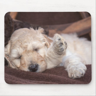 Sleeping Standard Poodle puppy Mouse Pad