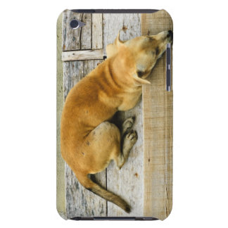 Sleeping street dog in Thailand iPod Touch Cases