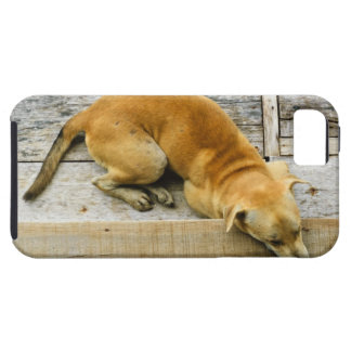 Sleeping street dog in Thailand Case For The iPhone 5