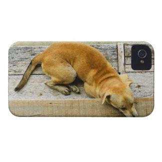 Sleeping street dog in Thailand iPhone 4 Case-Mate Case