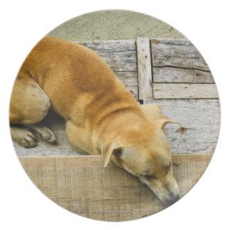Sleeping street dog in Thailand Plate