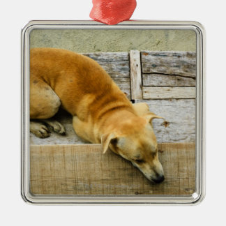 Sleeping street dog in Thailand Silver-Colored Square Decoration