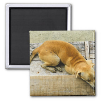 Sleeping street dog in Thailand Square Magnet
