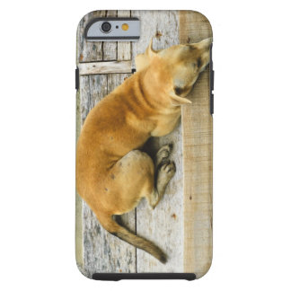 Sleeping street dog in Thailand Tough iPhone 6 Case