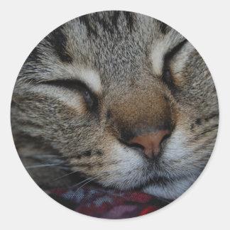 Sleeping Tabby Sticker