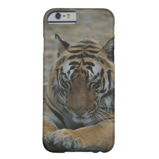 Sleeping Tiger Barely There iPhone 6 Case