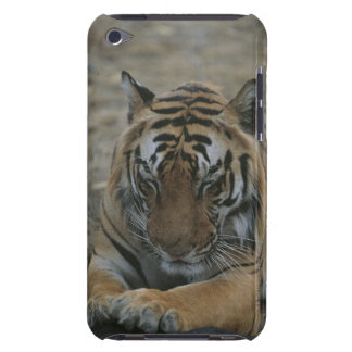Sleeping Tiger Barely There iPod Covers