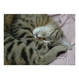 Sleeping Tiger-Cat Poster