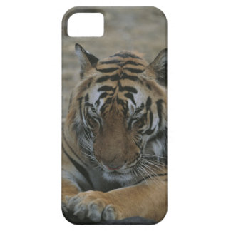 Sleeping Tiger iPhone 5 Cover