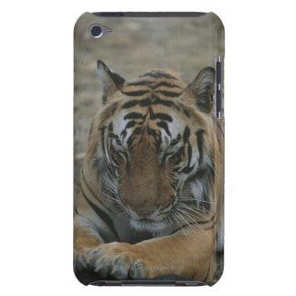Sleeping Tiger iPod Case-Mate Case