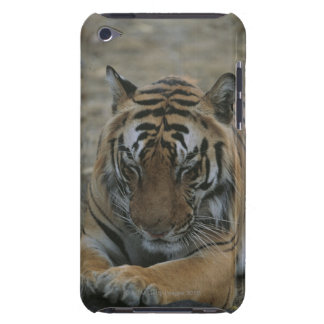 Sleeping Tiger iPod Touch Case-Mate Case