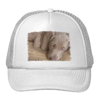 Sleeping Weimaraner Baseball Hat