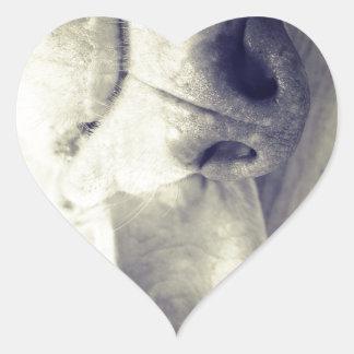 Sleeping weimaraner heart sticker