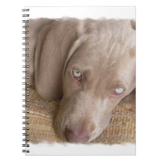 Sleeping Weimaraner Notebook