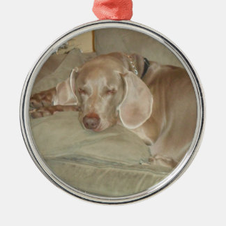 sleeping weimaraner puppy christmas ornament