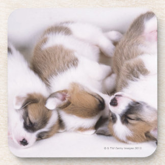Sleeping welsh corgi puppies coaster