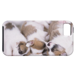 Sleeping welsh corgi puppies tough iPhone 5 case