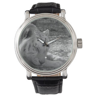 sleeping white tiger bw photograph of huge cat wristwatch