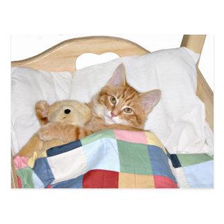 Sleeping with Teddy Postcard