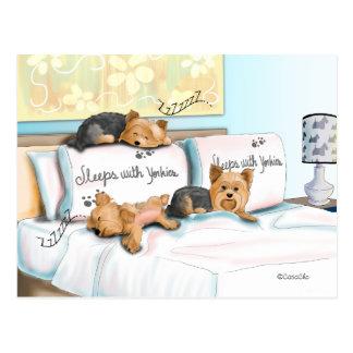 Sleeps with Yorkies Postcard