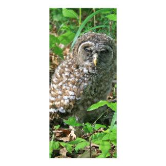 Sleepy Baby Barred Owl Bookmark Rack Card Template