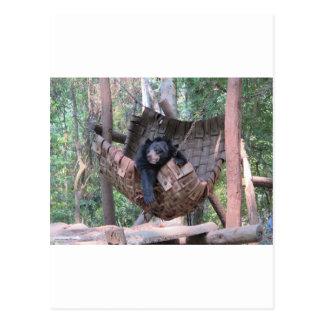Sleepy Bear Hammock Park Forest Trail Camping Art Postcard