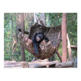 Sleepy Bear Hammock  Park Forest Trail Camping Art Post Card
