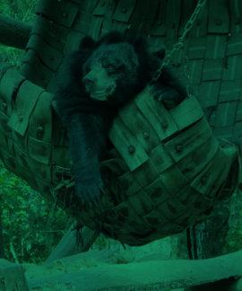 Sleepy Bear Hammock  Park Forest Trail Camping Art Shirt