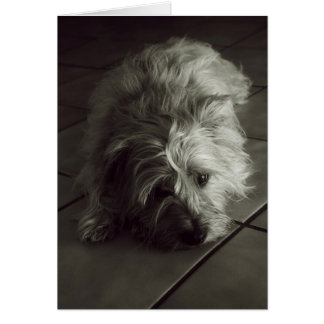 Sleepy cairn terrier card