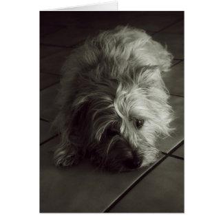 Sleepy cairn terrier greeting card