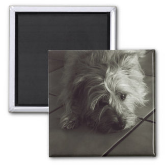 Sleepy cairn terrier magnet