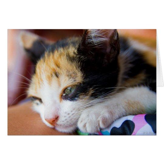 Sleepy Calico Kitten Card