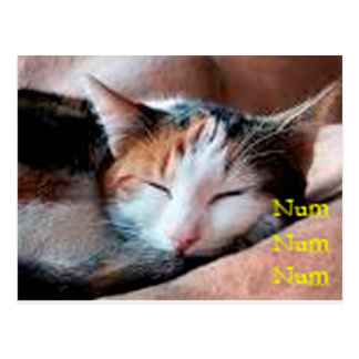Sleepy Cat Postcards