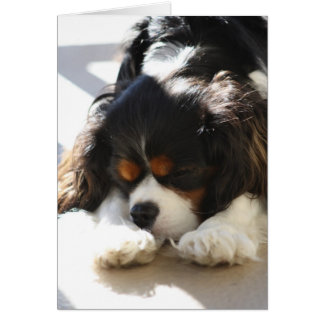 Sleepy Cavalier Card
