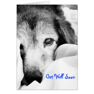 sleepy cuddle dog on bed get well cards