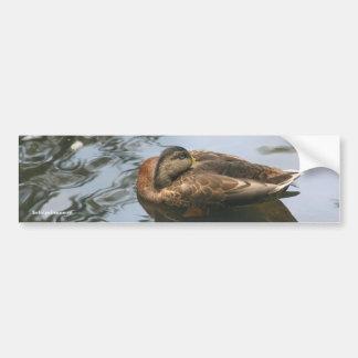 Sleepy Duck Nature Photo Bumper Sticker