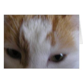 Sleepy eyed cat card