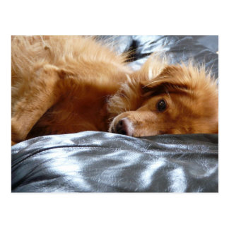 Sleepy Eyed Dog Postcard