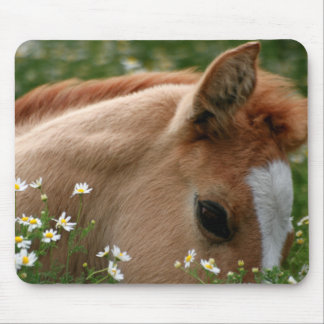Sleepy Foal Horse Mousepad