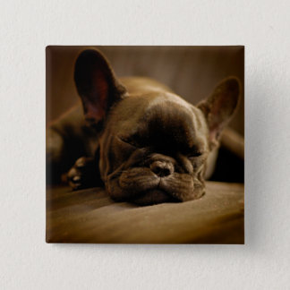 Sleepy French Bulldog 15 Cm Square Badge