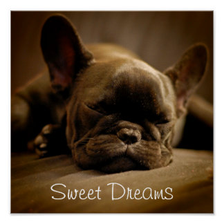 Sleepy French Bulldog Poster