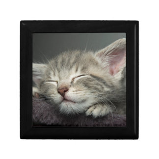 Sleepy Grey, Male Kitten Gift Box