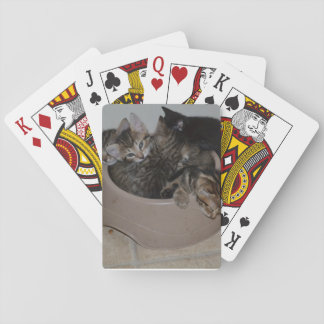 Sleepy kitten playing cards