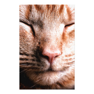 Sleepy Kitten Stationery