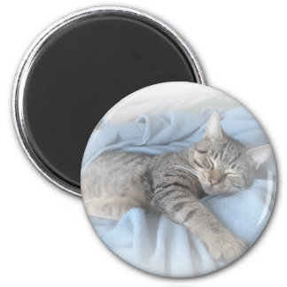 Sleepy Kitty Magnet