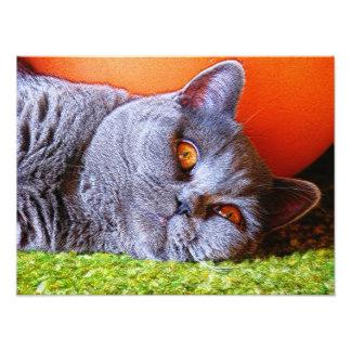 Sleepy Kitty Photo Print