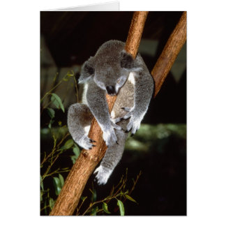 Sleepy Koala Card