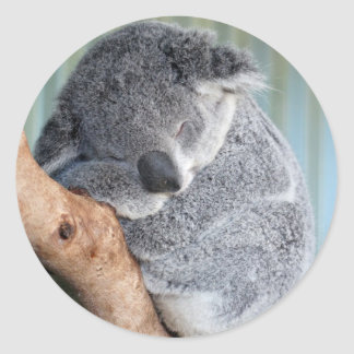 Sleepy Koala Classic Round Sticker