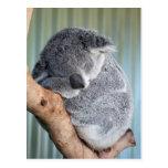 Sleepy Koala Postcard