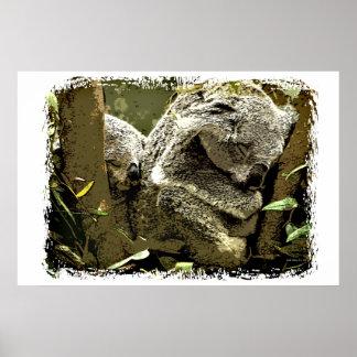 Sleepy Koalas Poster